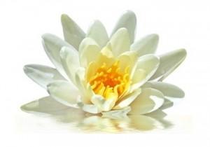 energie,rituel,bien-êtrencorps,esprit